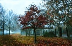 Bomen in de herfst een mistige dag in het park stock foto