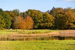 Bomen in de herfst en mensen die dichtbij vijver, Nederland lopen Stock Foto