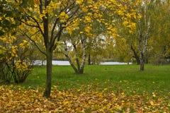 Bomen in de herfst in park Royalty-vrije Stock Afbeeldingen