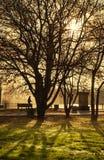 Bomen in de herfstpark Stock Afbeelding