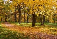 Bomen in de herfstpark Royalty-vrije Stock Afbeeldingen