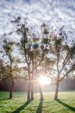 Bomen in de het toenemen zon stock afbeeldingen