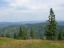 Bomen in de Karpaten Stock Afbeeldingen