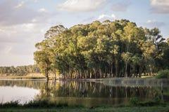Bomen in de lagune Stock Foto's