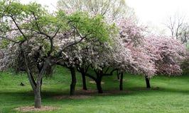 Bomen in de Lente Stock Afbeeldingen