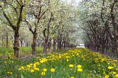 Bomen in de lente Royalty-vrije Stock Afbeeldingen