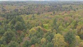 Bomen in de lente op de Bergen Pennsylvania van Bergpocono stock footage