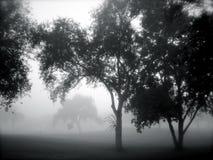 Bomen in de Mist Stock Foto's