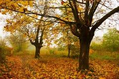 Bomen in de mist royalty-vrije stock afbeelding