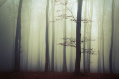 Bomen in de mist Stock Foto