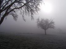 Bomen in de mist Royalty-vrije Stock Foto's