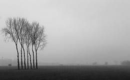 Bomen in de mist Stock Afbeelding