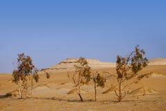 Bomen in de oase van de Sahara van de Woestijn, Egypte Stock Foto's