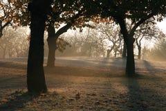 Bomen in de ochtend Royalty-vrije Stock Afbeelding