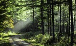 Bomen in de ochtendzon stock foto's