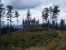 Bomen in de opheldering royalty-vrije stock foto