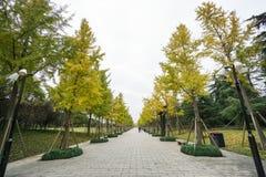 Bomen in de parkdraai aan geel stock foto