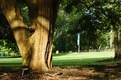 Bomen in de parken Royalty-vrije Stock Fotografie