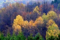Bomen in de Recente Herfst Stock Afbeeldingen