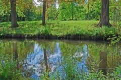 Bomen in de rivier Royalty-vrije Stock Foto's