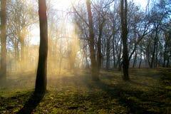 Bomen in de rook van zon meest forrest bergen Royalty-vrije Stock Foto's