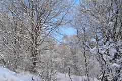 Bomen in de sneeuw Stock Afbeeldingen
