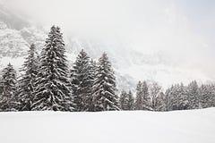 Bomen in de sneeuw Royalty-vrije Stock Afbeeldingen