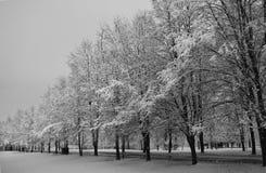 Bomen in de sneeuw Stock Fotografie