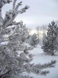 Bomen in de sneeuw in de bittere koude in de winter stock afbeelding