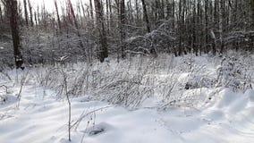 Bomen in de sneeuw in de winter stock videobeelden
