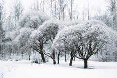 Bomen in de sneeuw in het Park De winterlandschap, royalty-vrije stock fotografie