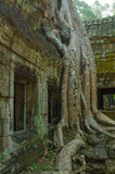 Bomen in de tempelcomplexen van Indochina stock afbeelding