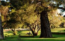 Bomen in de tuin Royalty-vrije Stock Afbeelding
