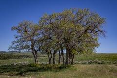 Bomen in de weide stock foto