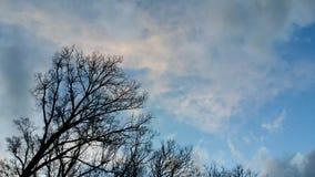 Bomen in de wind stock videobeelden