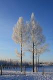 Bomen in de winter Royalty-vrije Stock Afbeeldingen