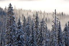 Bomen in de winter royalty-vrije stock foto's