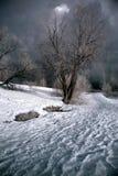 Bomen in de winter Stock Afbeelding