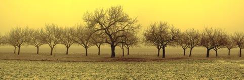 Bomen in de winter Royalty-vrije Stock Afbeelding