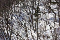 Bomen in de winter Stock Foto's