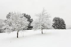 Bomen in de winterlandschap Stock Foto's