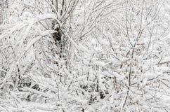 Bomen in de wintertijd, takken met wit sneeuw en ijs worden behandeld dat Royalty-vrije Stock Afbeeldingen