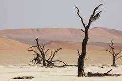Bomen in de woestijn royalty-vrije stock afbeelding