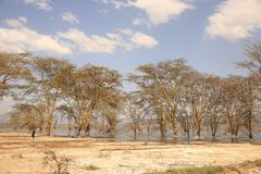 Bomen in de woestijn royalty-vrije stock afbeeldingen