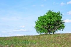Bomen in de zomer Royalty-vrije Stock Fotografie
