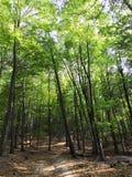 Bomen in de zomer en weg stock foto's