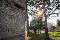Bomen in de zomerbos royalty-vrije stock foto