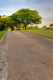 Bomen in de zon Royalty-vrije Stock Afbeelding