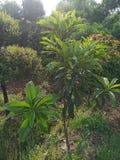 Bomen in de zon stock fotografie
