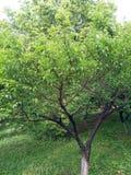 Bomen in de zonneschijn stock foto's
